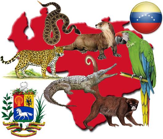 Animales extintos y en peligro de extinción en Venezuela