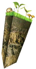 Los vegetales y el suelo for El suelo y sus capas