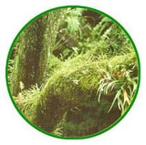 musgos - briofitas