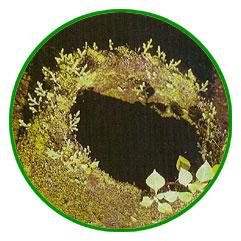 botanic18jpg