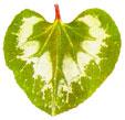 http://www.barrameda.com.ar/botanica/images/botanic41.jpg