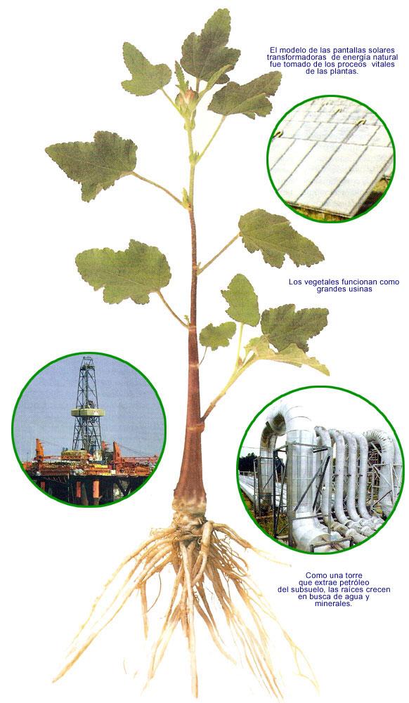 los vegetales plantas: