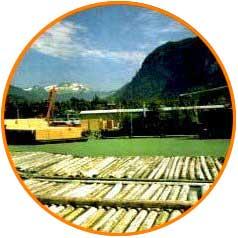 explotación maderera