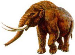 Seins mammouth en bas