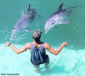 avistamiento de delfines - Naturaleza y Medio Ambiente