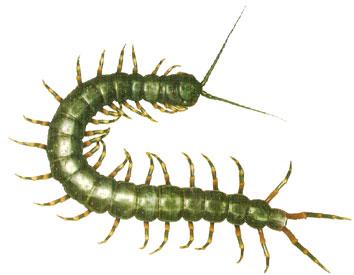 Las funciones vitales de los invertebrados