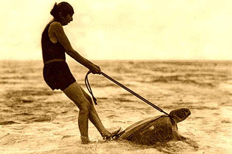Carreras sobre tortugas - 1930 - Australia