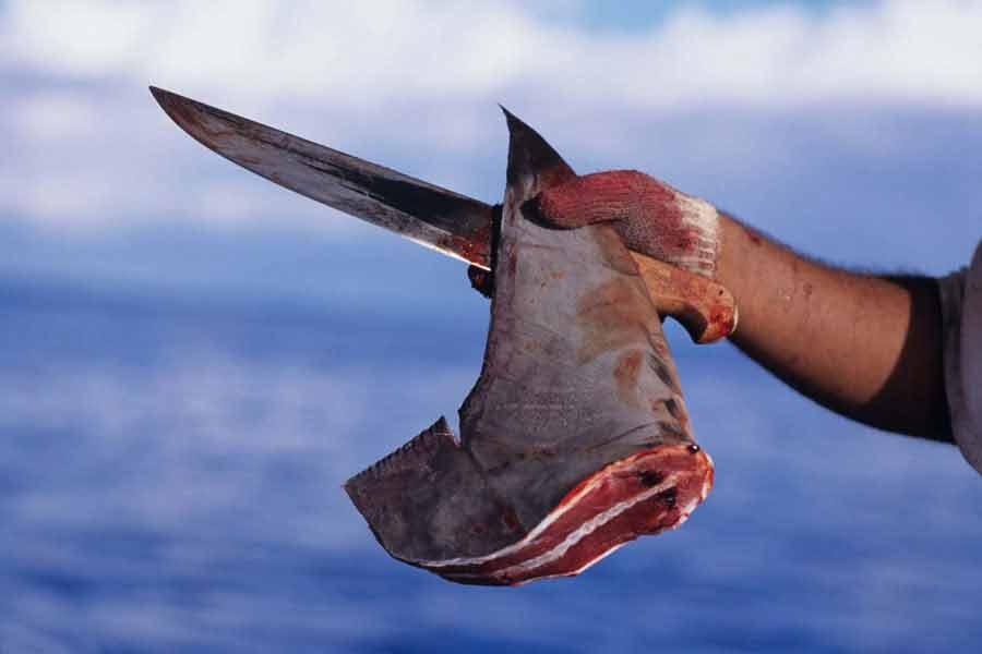 Aletas de tiburones