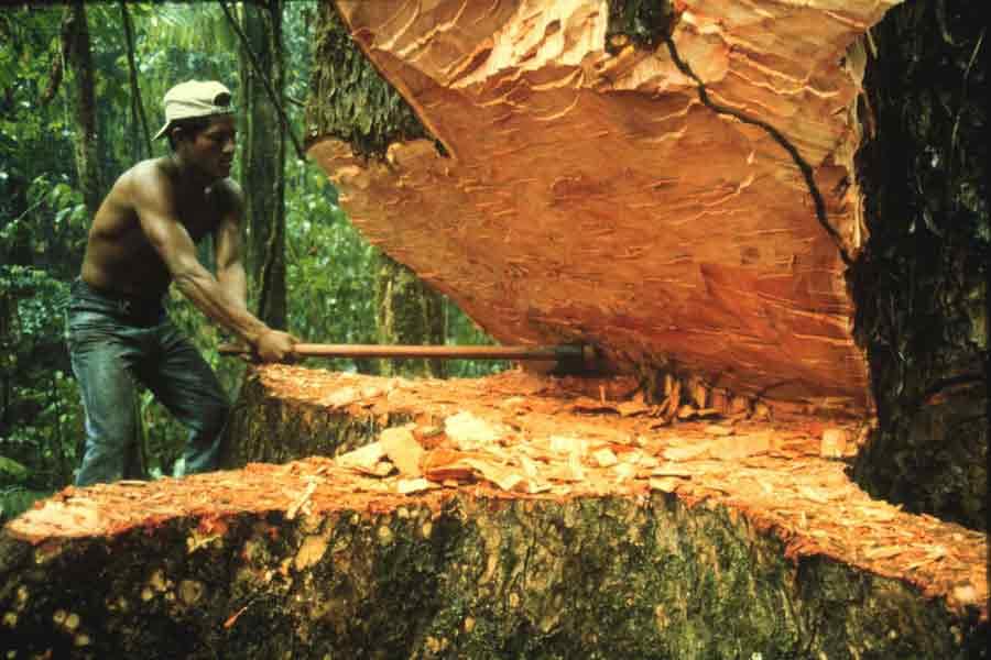 Bosques en peligro