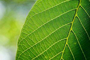 ¿Qué es la botánica?
