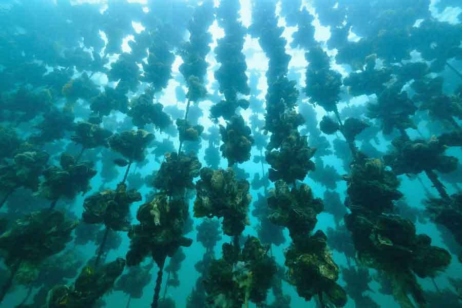 Cultivos marinos