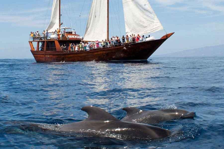 Delfines amistosos