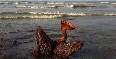 Desastres ecológicos