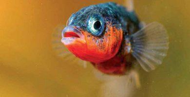 Las funciones vitales de los vertebrados (1)