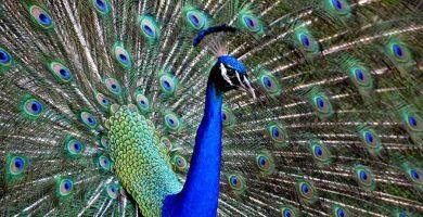 Las funciones vitales de los vertebrados (2)