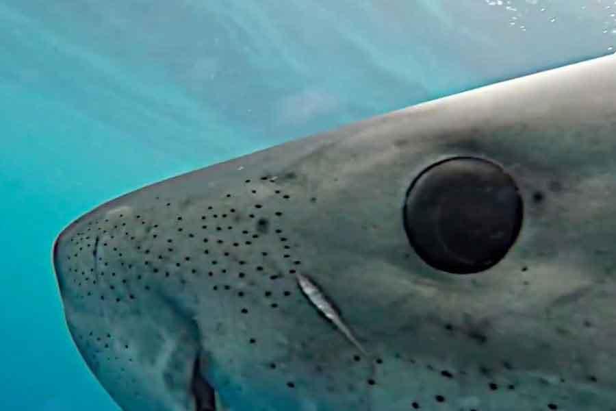 Ojos de tiburón