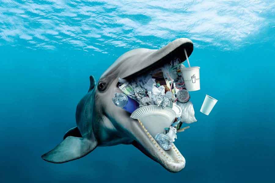 Delfines y desechos plásticos