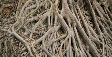 Morfología, de la raíz al fruto
