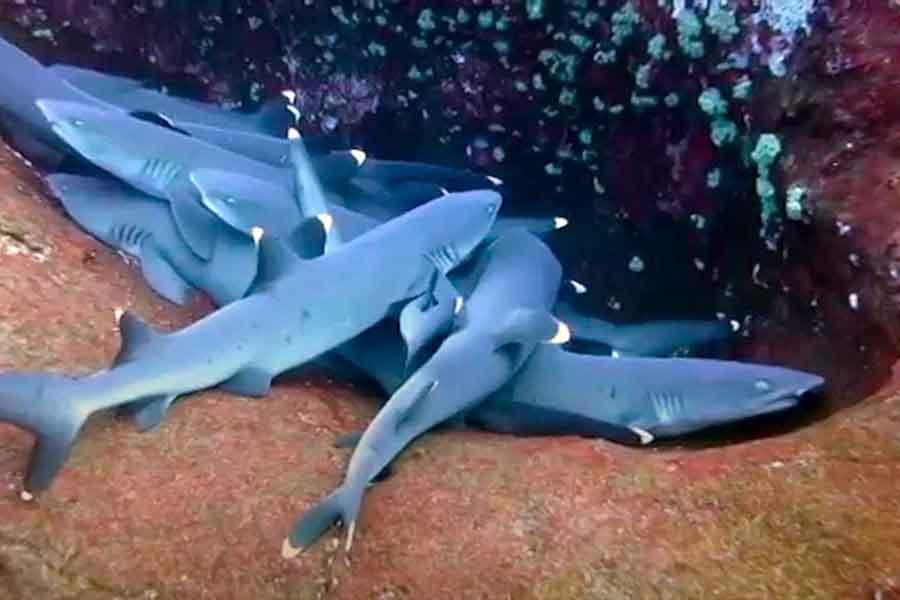 Tiburones durmientes