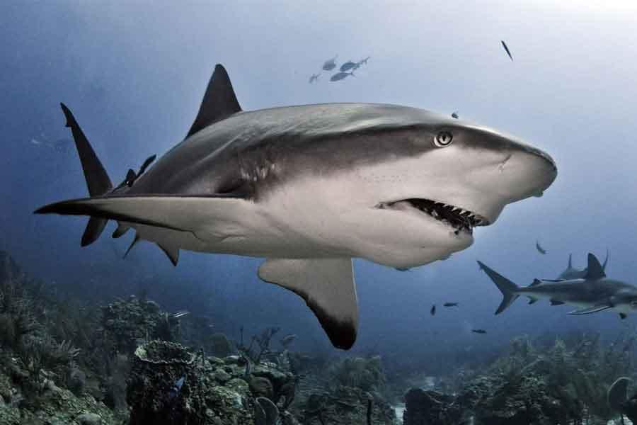 Tiburones en movimiento
