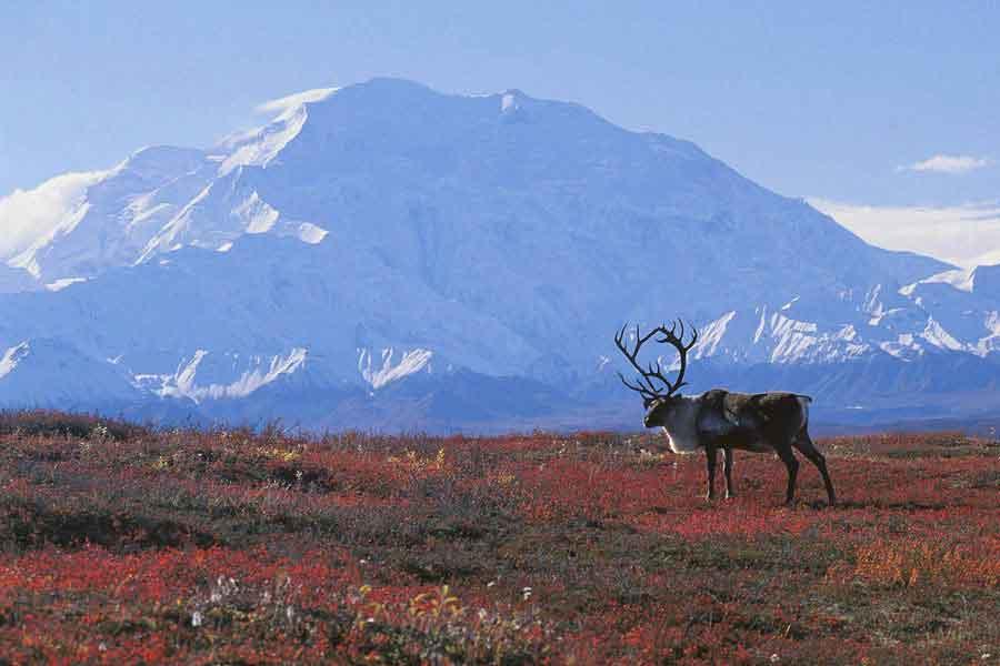La tundra y la taiga