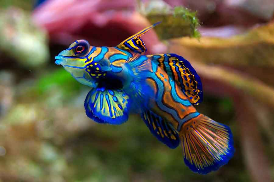 Pez marino