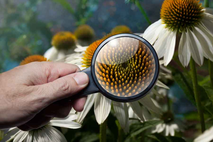 La botánica