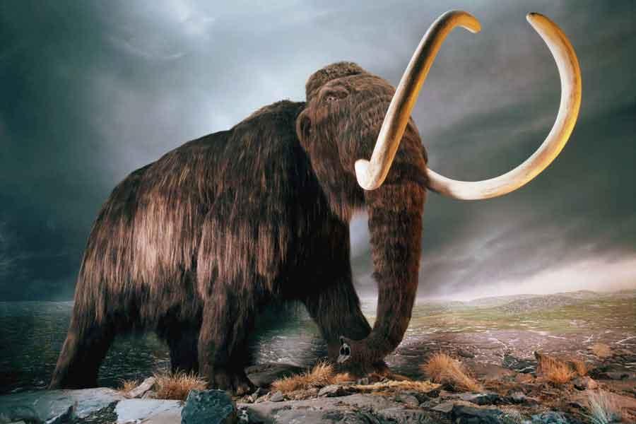 ¿Cuántas especies se han extinguido?