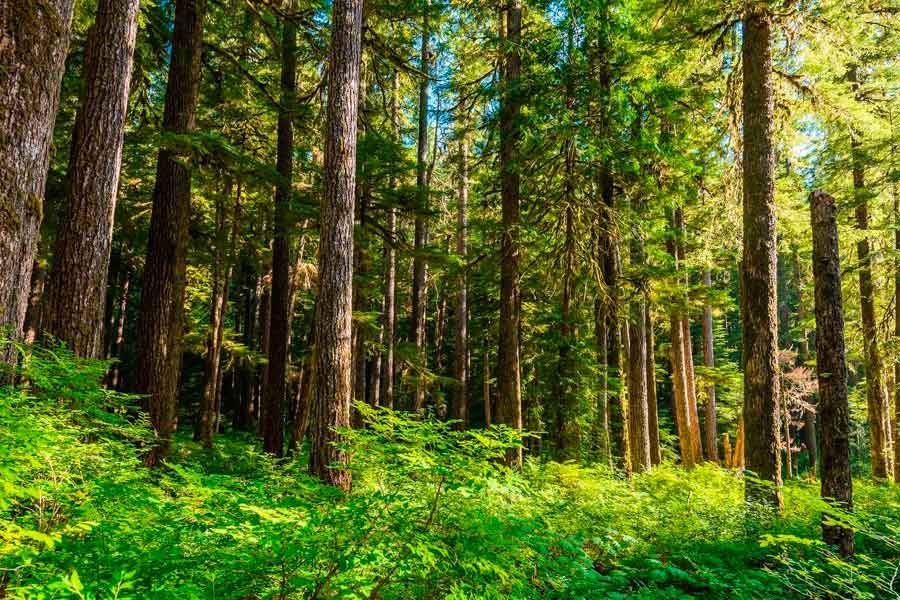 Nuestros bosques