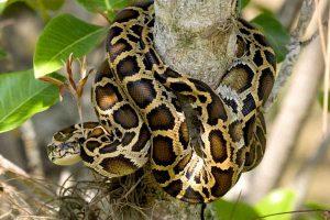 Especies invasoras: impacto medioambiental