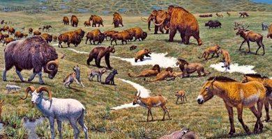 Algunos biomas extintos