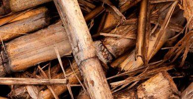 ¿Qué es el biogás?