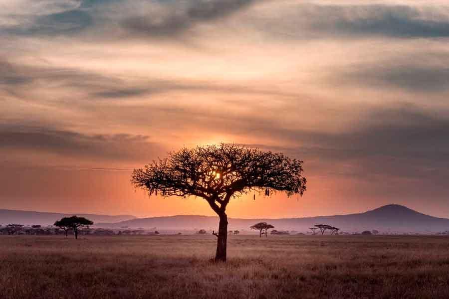 El Serengeti