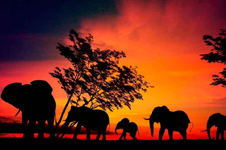 Elefantes en el Serengeti