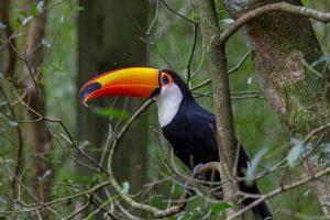 Día Mundial del Medio Ambiente, efemérides, ecología, biodiversidad, tema, 2020, Colombia