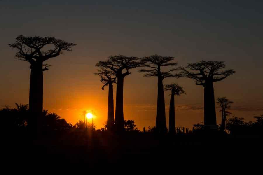 La problemática ecológica en Madagascar